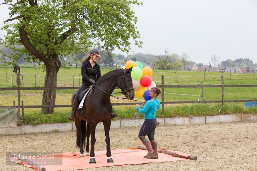 Paarden die zich 'verzetten' hebben meestal iets te vertellen… grondwerk met Magali Van der Heyden