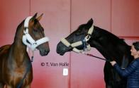 Aéroport de Liège – Horse inn … En route pour les Jeux Olympiques de Rio